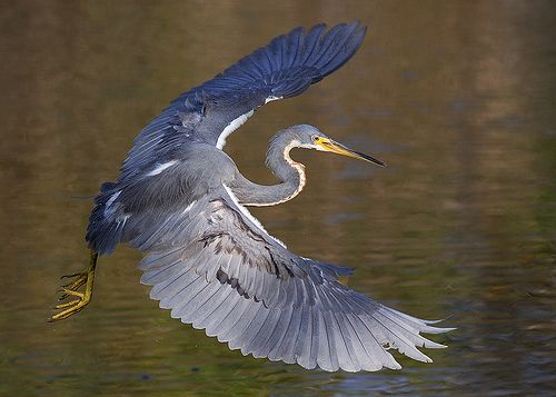 Lessons in Grant Seeking from a Tricolored Heron